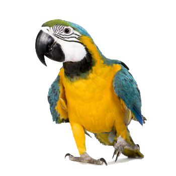 Macaw Photos PNG Images