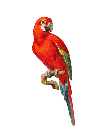 Macaw Transparent Image 20 PNG Images