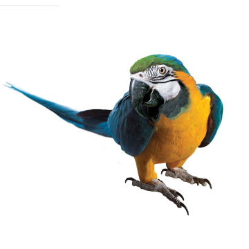 Macaw Clipart Transparent 22 PNG Images