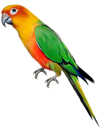Macaw Clipart Transparent 9 PNG Images