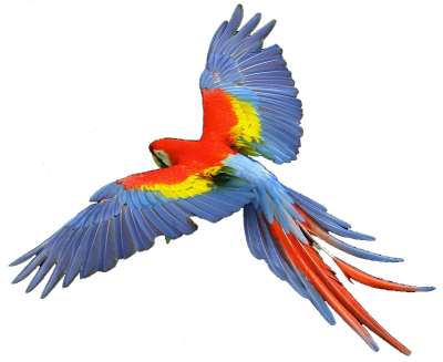 Macaw Flying Picture PNG Images