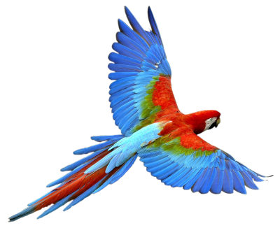 Macaw Transparent PNG Images