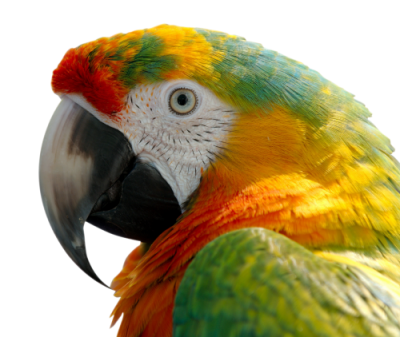 Macaw Amazing Image Download PNG Images