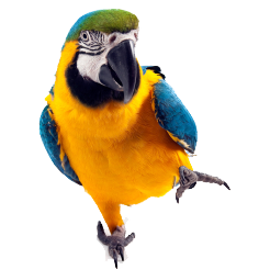 Macaw Icon Clipart PNG Images