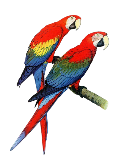 Macaw High Quality PNG Images