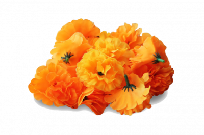 Marigold Free PNG PNG Images