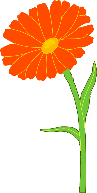 Marigold Free Cut Out PNG Images