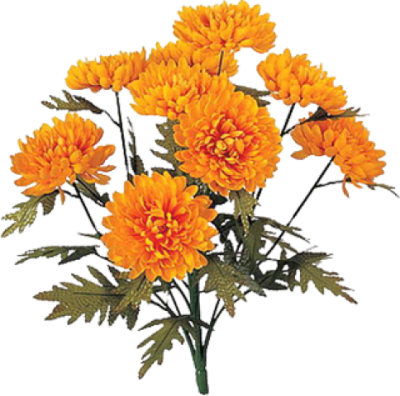 Marigold Icon Clipart PNG Images