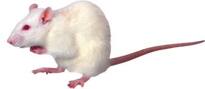 Side View Angry White Mouse Hd Png images, Animal PNG Images