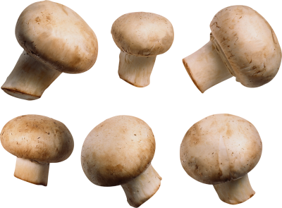 Mushroom Cut Out PNG Images