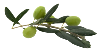 Olive Png Picture PNG Images