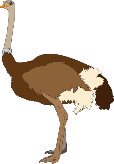 Clipart Ostrich Images PNG Images