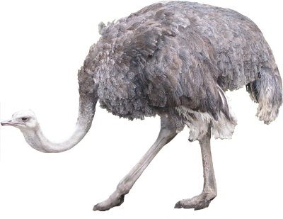 Grey Ostrich Png Images