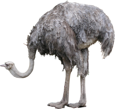 High Quality Standing Ostrich Png
