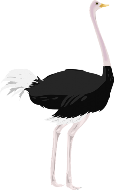 Natural Ostrich Png Image PNG Images
