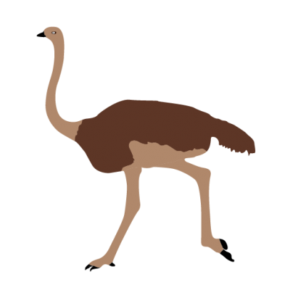 Ostrich Image Clipart Animals PNG Images
