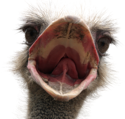 Ostrich Png Transparent Image   PNG Images