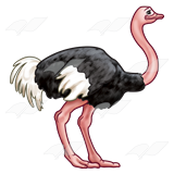 Ostrich Transparent Images