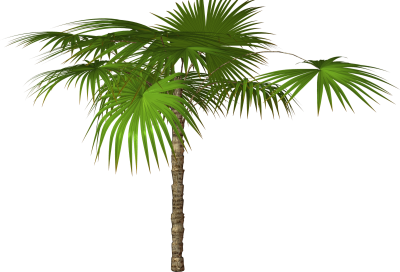 Palm Tree Free Download Transparent