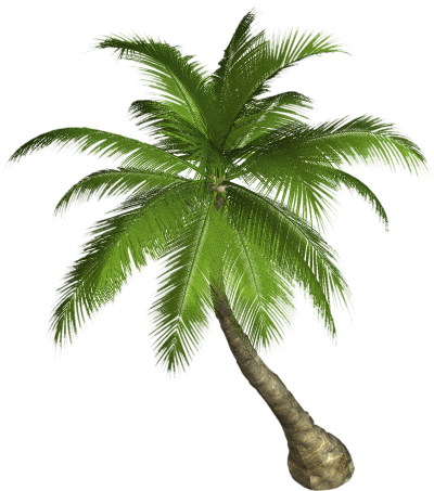 Palm Tree Png PNG Images