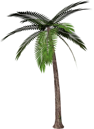 Palm Tree PNG Picture