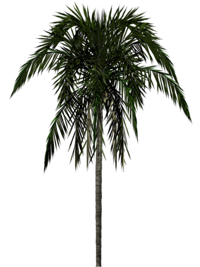 Palm Tree Simple PNG Images
