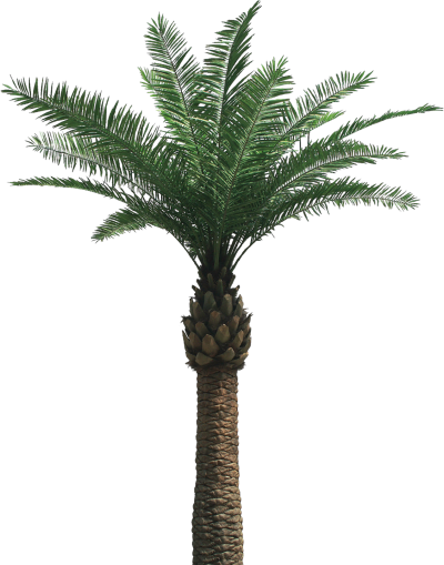 Palm Tree Wonderful Picture Images