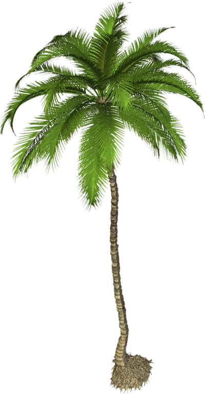 Photos Palm Tree PNG Clipart