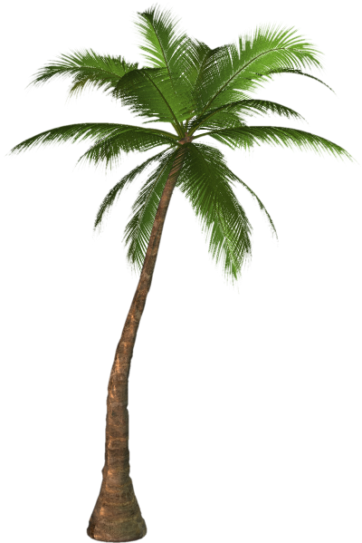 Picture PNG Palm Tree
