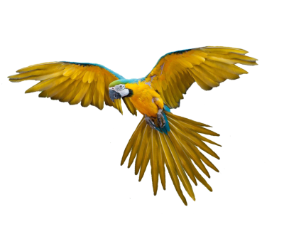 Parrot Fly Cut Out PNG Images