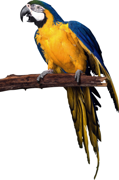 Parrot Colorful Animal Transparent Background PNG Images
