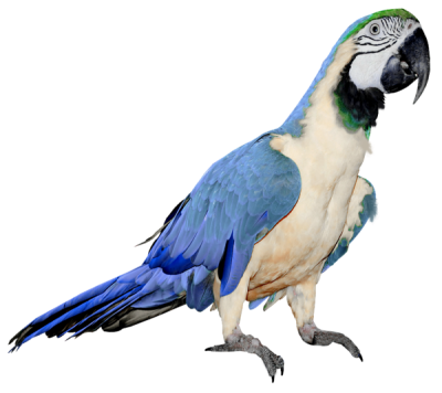 Parrot Icon PNG Images