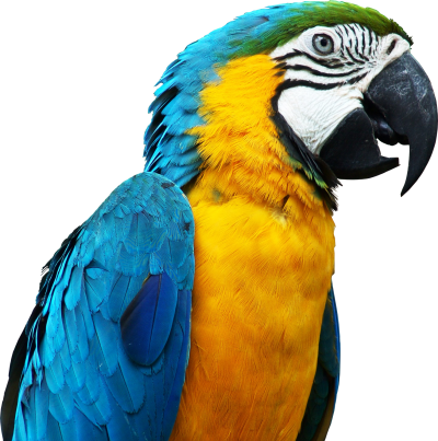 Parrot Clipart File PNG Images