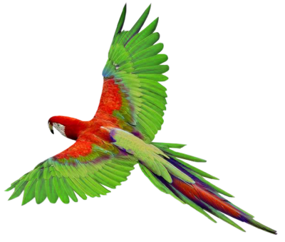 Parrot Animal Clipart Hd PNG Images