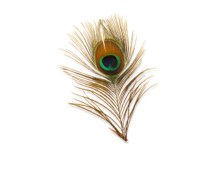 Beautiful Peacock Feathers Eye Photo PNG Images
