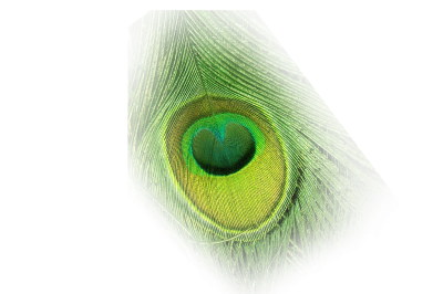 Beautiful Peacock Feathers Eye Pictures PNG Images
