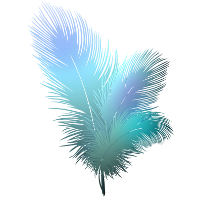 Bird, Feather Transparent