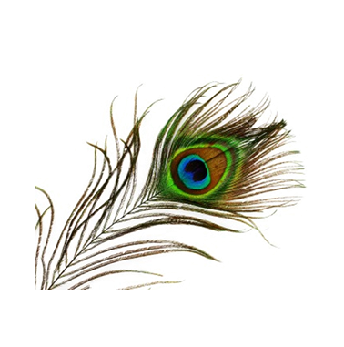 Family Therapy, Peacock, Bird, Eye images PNG Images