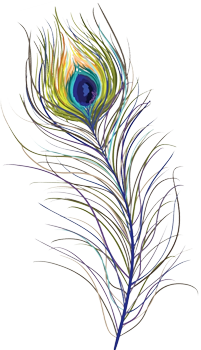 Peacock, Bird, Feather, Colorful, Eye, Png
