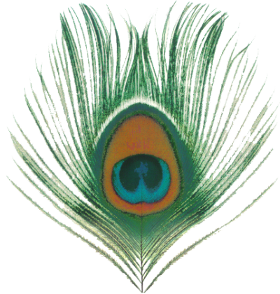 Peacock, Bird, Feather, Colorful, Eye, Png Transparent Images