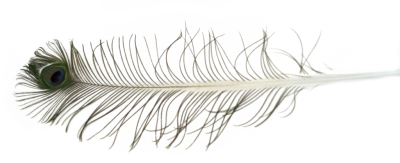 Peacock Feather, Eye, White Pictures PNG Images