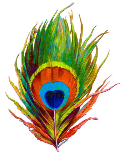 Peacock Feather Png Designs