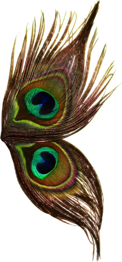 Peacock feather krishna png - photo#44