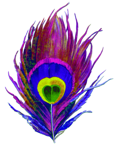 Purple, Peacock, Bird, Feather, Colorful, Eye, Designs Png