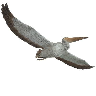 Natural History Pelicans Png PNG Images