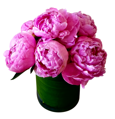 Vase Peony Clipart HD PNG Images