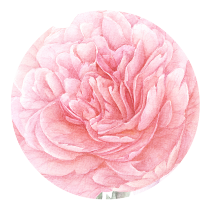 Peony Free PNG PNG Images