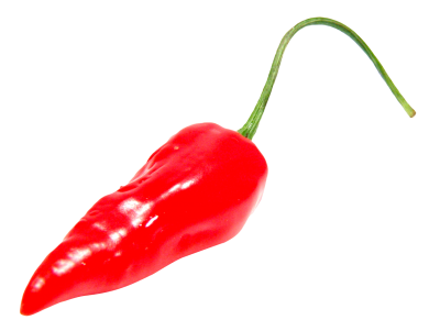 Pepper Wonderful Picture Images 13 PNG Images