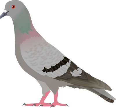 Pigeon Clipart Photos PNG Images