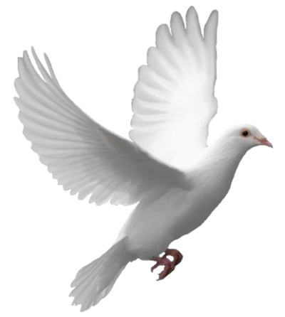 Pigeon Free Download Transparent PNG Images